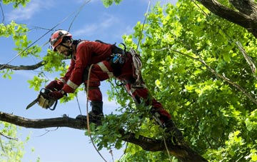 find trusted rated Dunkeld tree surgeons in Perth And Kinross