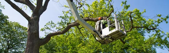 Dunkeld tree surgery services