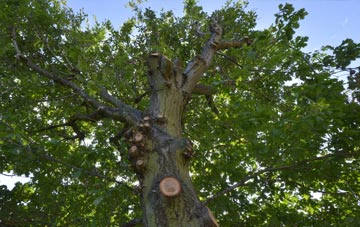 what is Dunkeld tree surgery?
